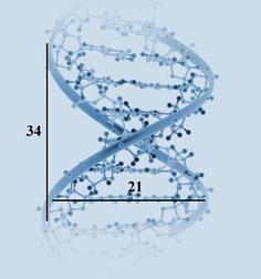 Det gylne snitt - DNA